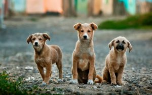 How Safe is Your Garage 5 Tips to Keep Pets Safe